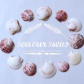 SeaOurShells